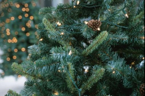 Volunteers offer Christmas tree collection