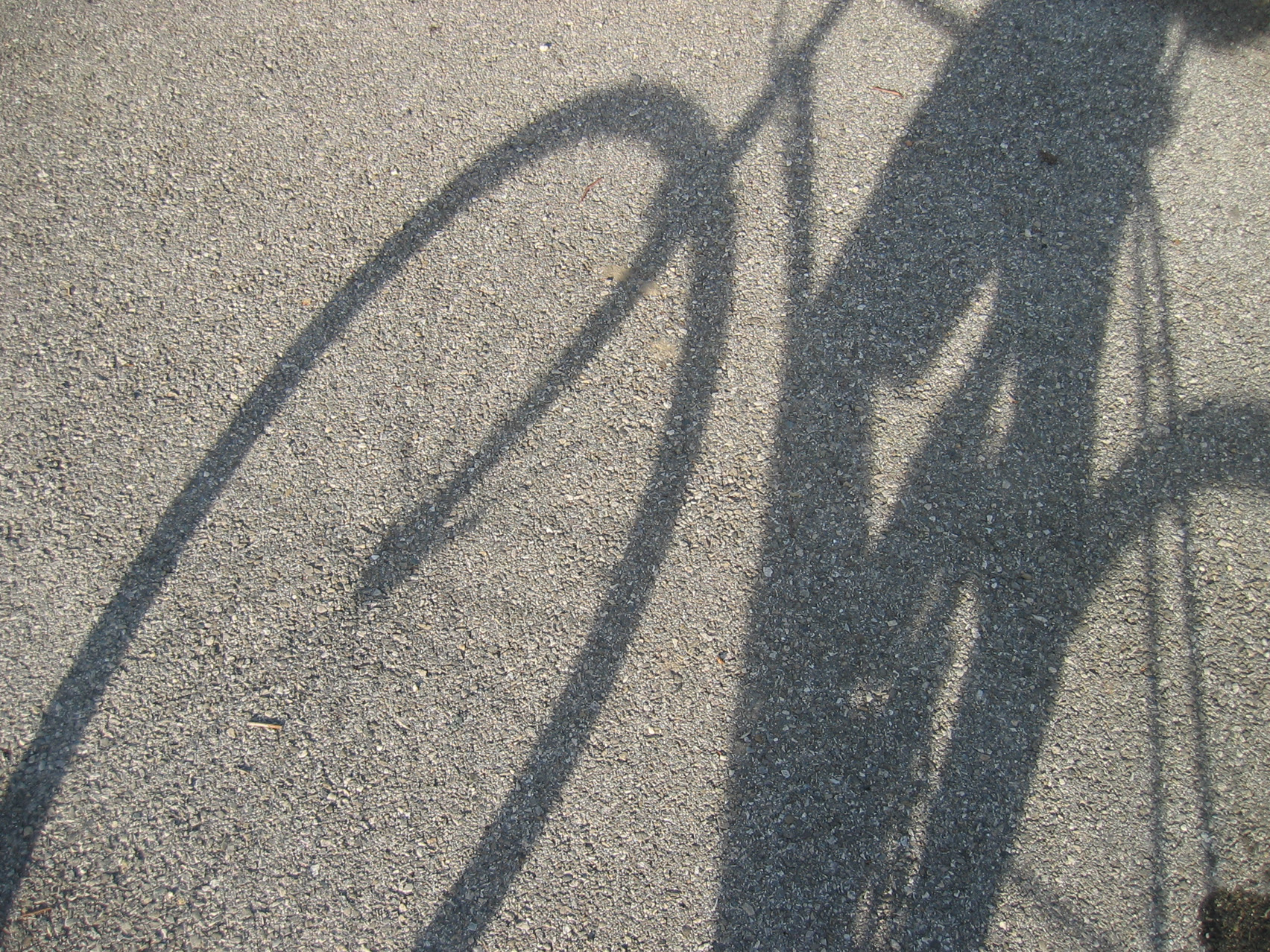 PEDAL POWER: Why groups cycle two-abreast