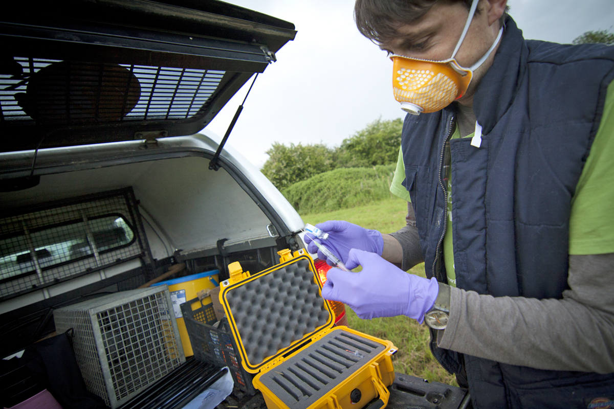 Time to support badger vaccinations says Trust
