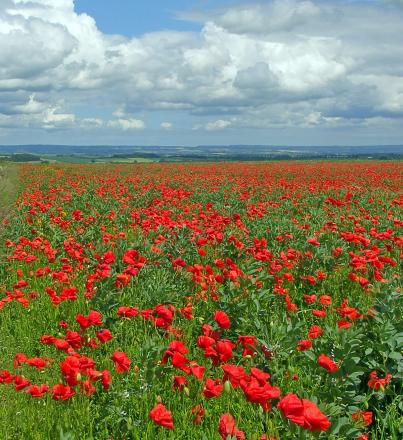 Davenham to mark war centenary