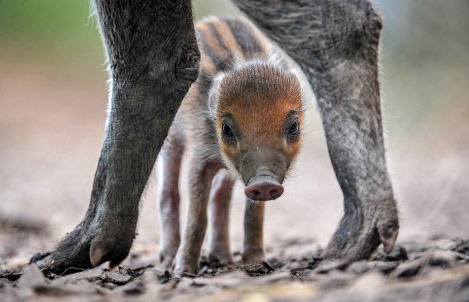 Chester Zoo welcomes criti