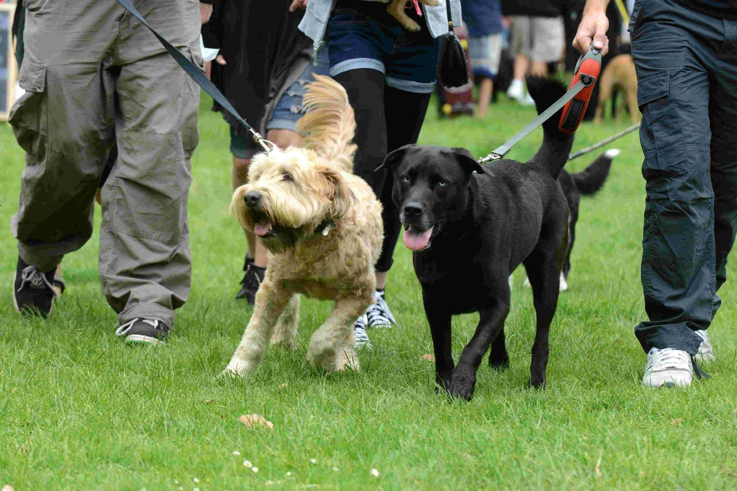 Castle church hosts fete and dog show.