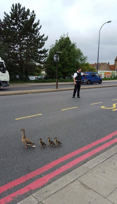 Pic by Lewisham police