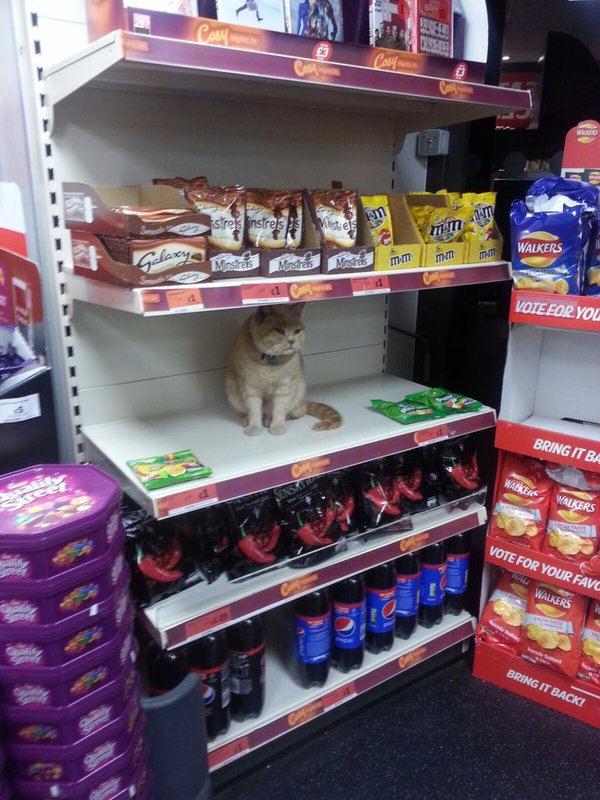 The cat among the fruit pastilles at Brockley Sainbury's