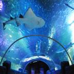 Northwich Guardian: Walk through the underwater tunnel at Sea Life