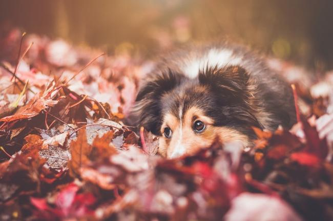 Why you need to stop your dog from playing with conkers this autumn